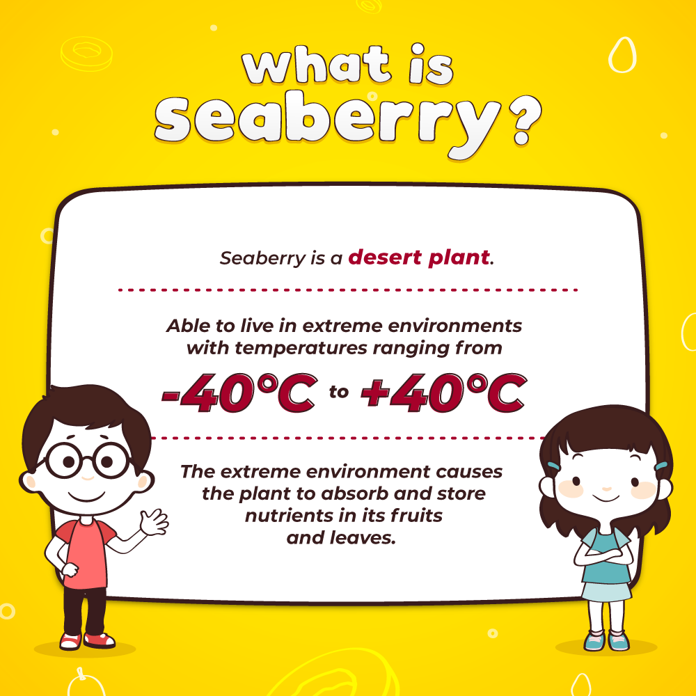 What is Seaberry? 1